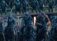 Dawn-of-the-planet-of-the-apes-photo