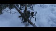 WPOTA Caesar jumps on a tree