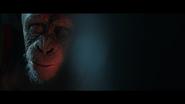 WPOTA Bad Ape asking Caesar why Nova's with them