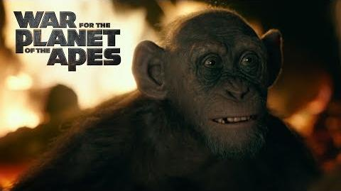 War for the Planet of the Apes Meeting Bad Ape 20th Century FOX