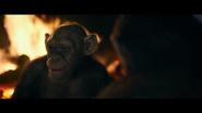WPOTA Bad Ape 8