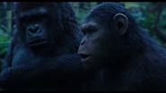 Caesar & Unknown Gorilla