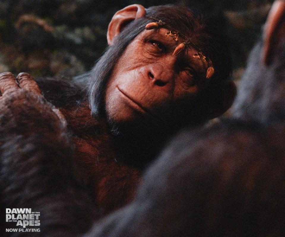 Cornelia | Planet of the Apes Wiki | FANDOM powered by Wikia