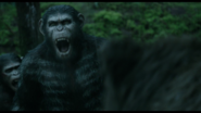 Caesar howls for reinforcement