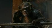 Koba snarls at Caesar while holding a gun