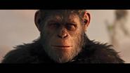 WPOTA Caesar's last look at his tribe before passing