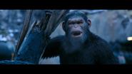 WPOTA Caesar shouting