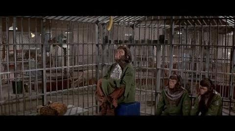 Escape from the Planet of the Apes (1971) Zira doesn't like bananas