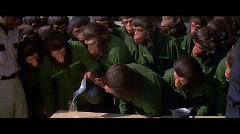 Conquest of the Planet of the Apes (1972) Ape training part 3