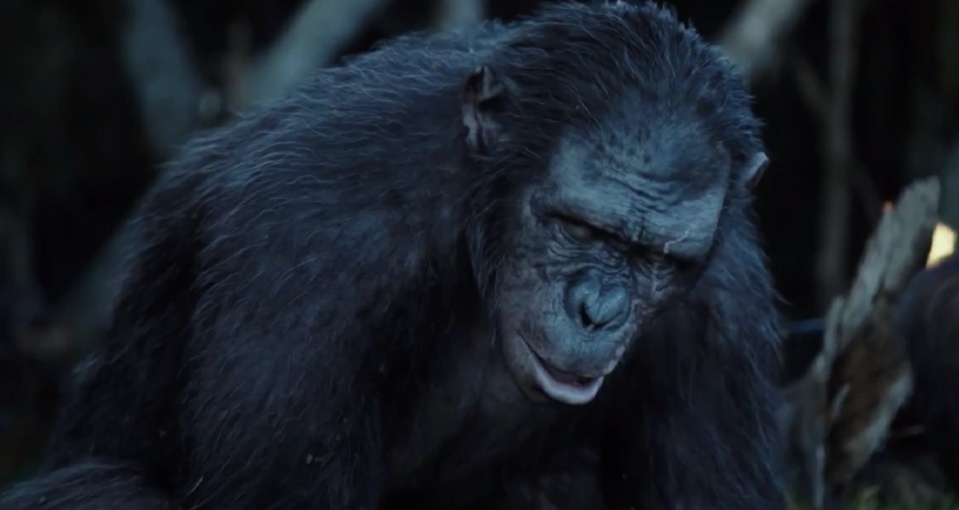 Koba Planet Of The Apes Wiki Fandom