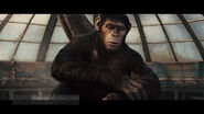 Rise of the Planet of the Apes11
