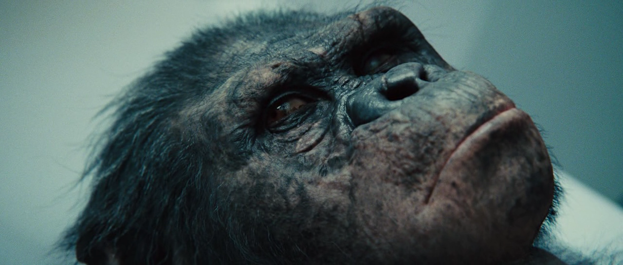 rise of the planet of the apes 2 full movie download in hindi