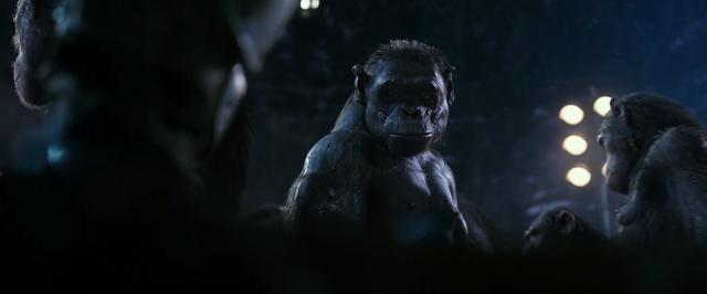 File:WPOTA an ape who looks like Stone.png
