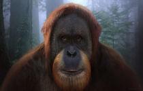 WPOTA Orangutan Elder 2