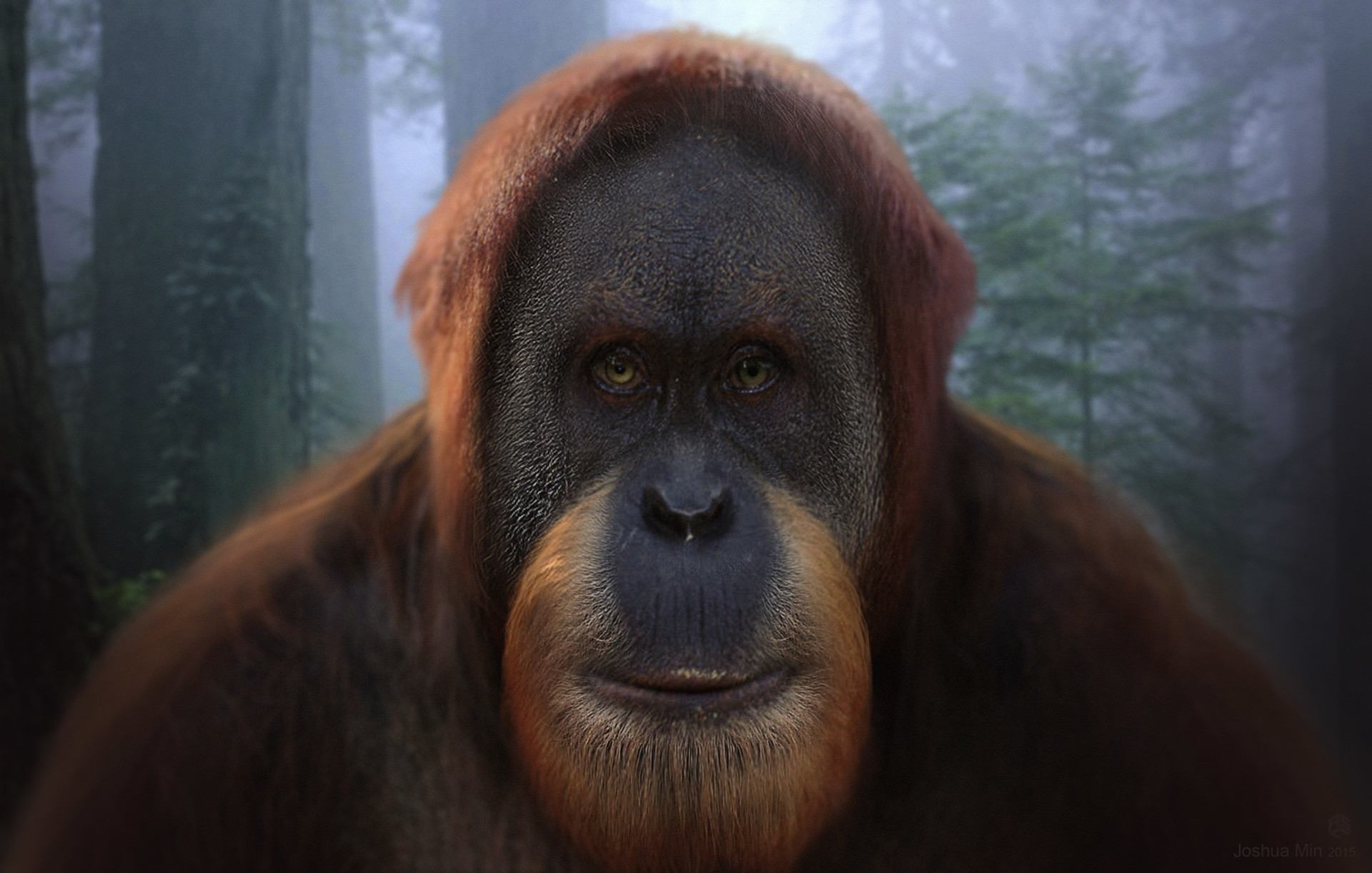 percy planet of the apes wiki fandom powered by wikia