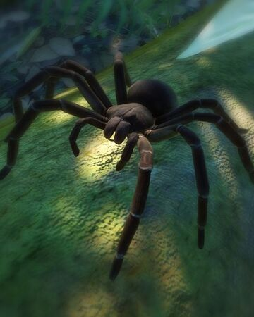 Goliath Birdeater Planet Zoo Wiki Fandom