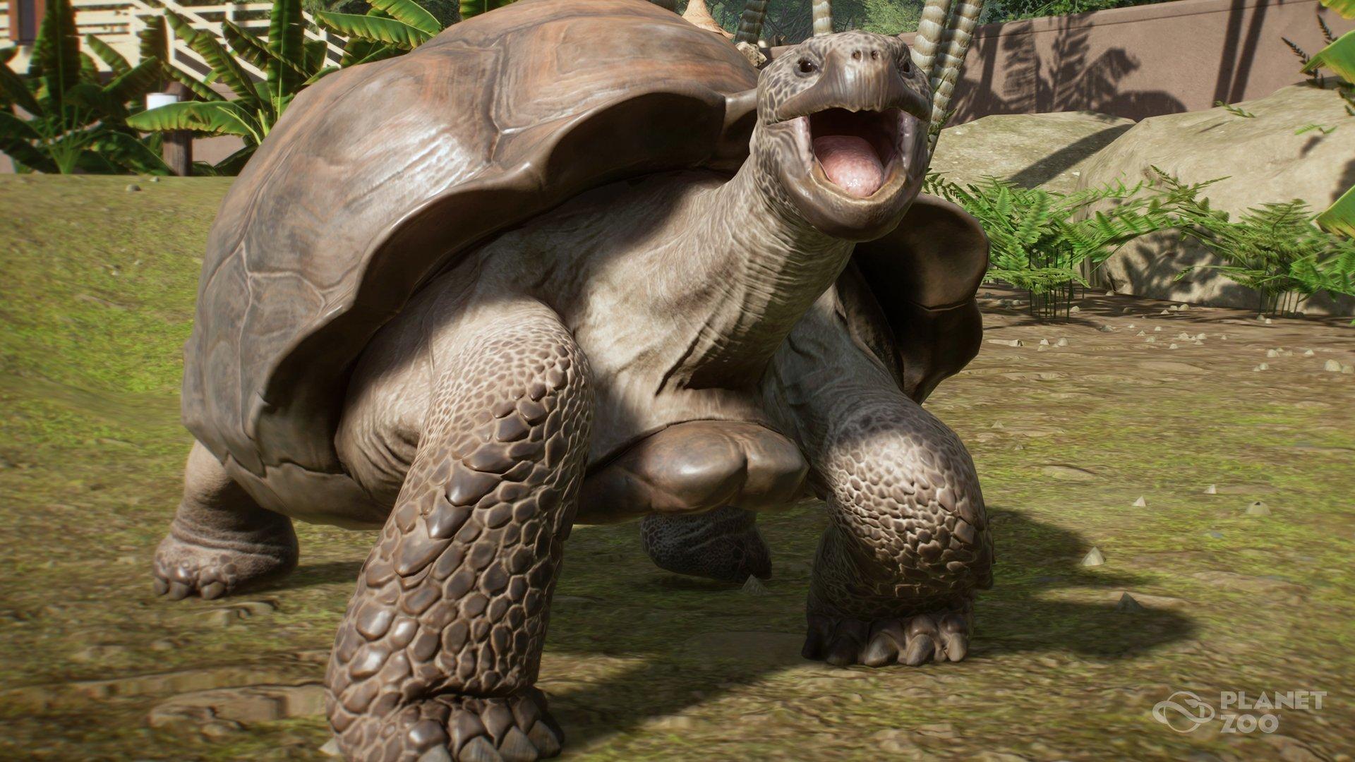 Giant Galapagos Tortoise Planet Zoo Wiki Fandom