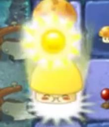 Champi soleil engrais