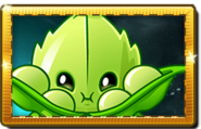 1Appease-mint New Premium Seed Packet