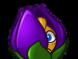 Violette Rétrécissante