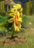 1Rooted Sunflower
