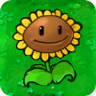 1Giant Sunflower1