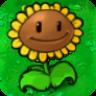 Giant Sunflower2