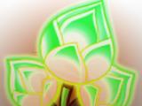 Boot-leg Gold Bloom