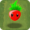 Sweet Strawberry2