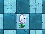 Bubble Flower