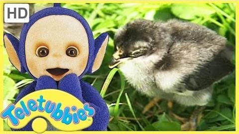 Teletubbies English Episodes - Chicks ★ Full Episode 228 - US