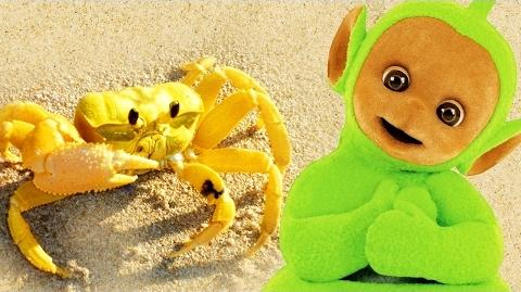 Teletubbies- Digging In Sand - Crabs - 134 - Cartoons for Children
