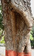 Bark I IMG 4093