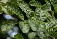 Leaves I IMG 4112