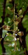 Flowering stalk I IMG 4103
