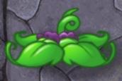 Snap Pea's Leaves