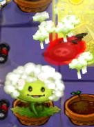 Dandelion JttW Attacking