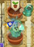 Watering Aloe
