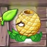 Pineapple Plant Food