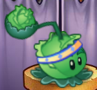 Cabbage-pultCostumeO22