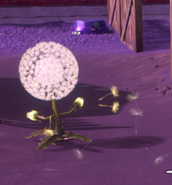Back Dandelion