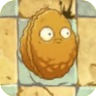 Wall-nut2C