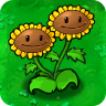 TwinSunflowerPlant