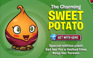 Sweet Potato ad