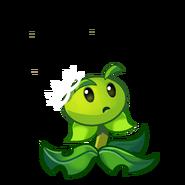 Dandelion33