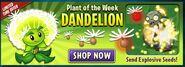 New Dandelion Ads