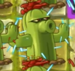 Plant food cactus