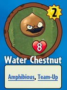 Water Chestnut Premium Pack