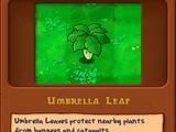 Зонтичный Лист