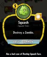Squash description